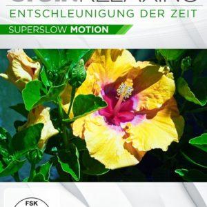Brain Relaxing – Kraft der Farben – (DVD)